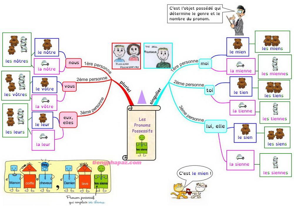 Đại từ sở hữu trong tiếng Pháp - Ngữ Pháp và cách sử dụng